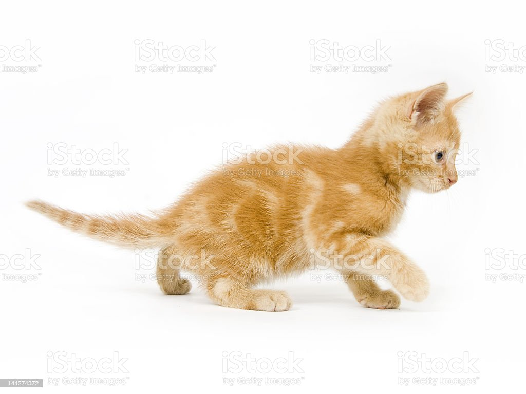 Yellow kitten playing stock photo