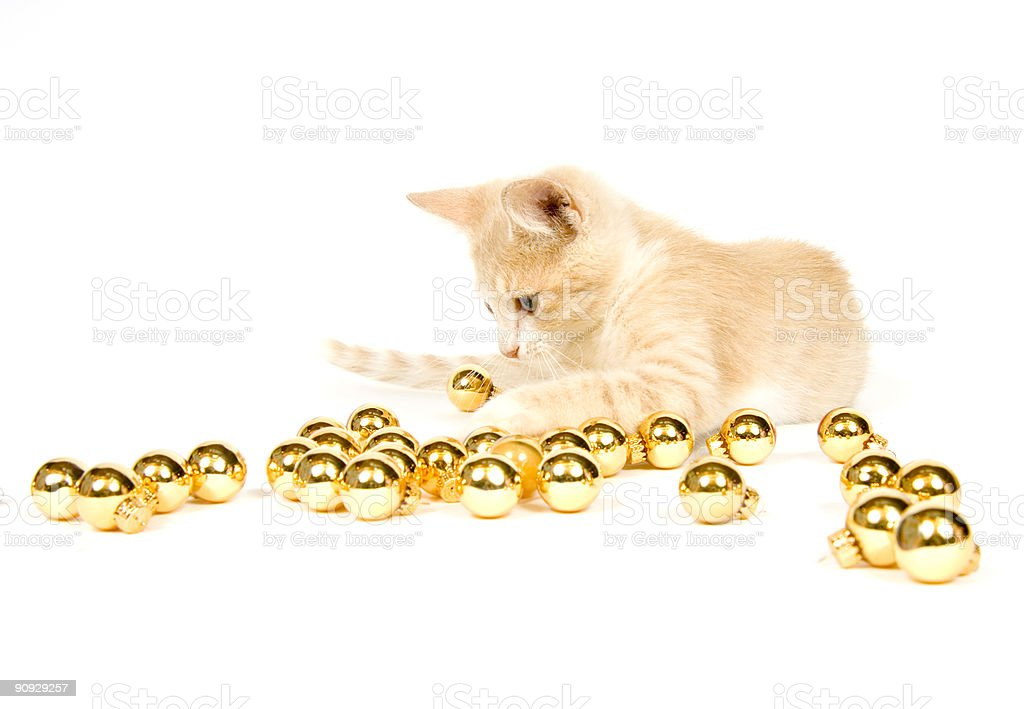 yellow kitten playing with Christmas Decorations royalty-free stock photo