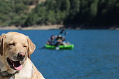 yellow lab with collar at the lake