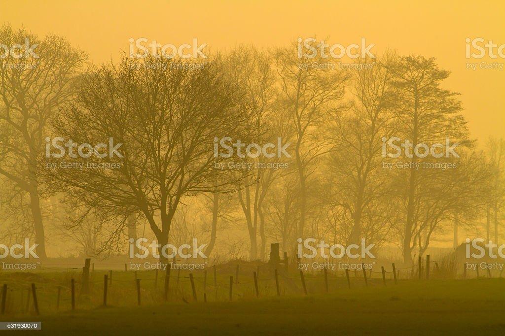 Yellow landscape during misty morning sunrise stock photo