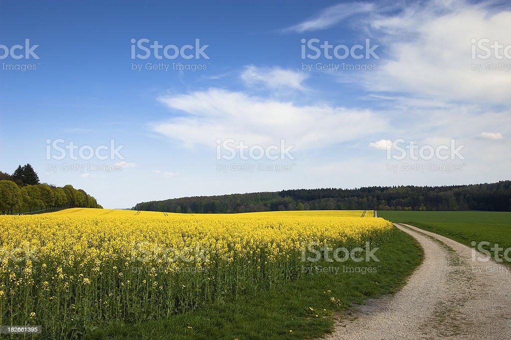 Yellow Landscape stock photo