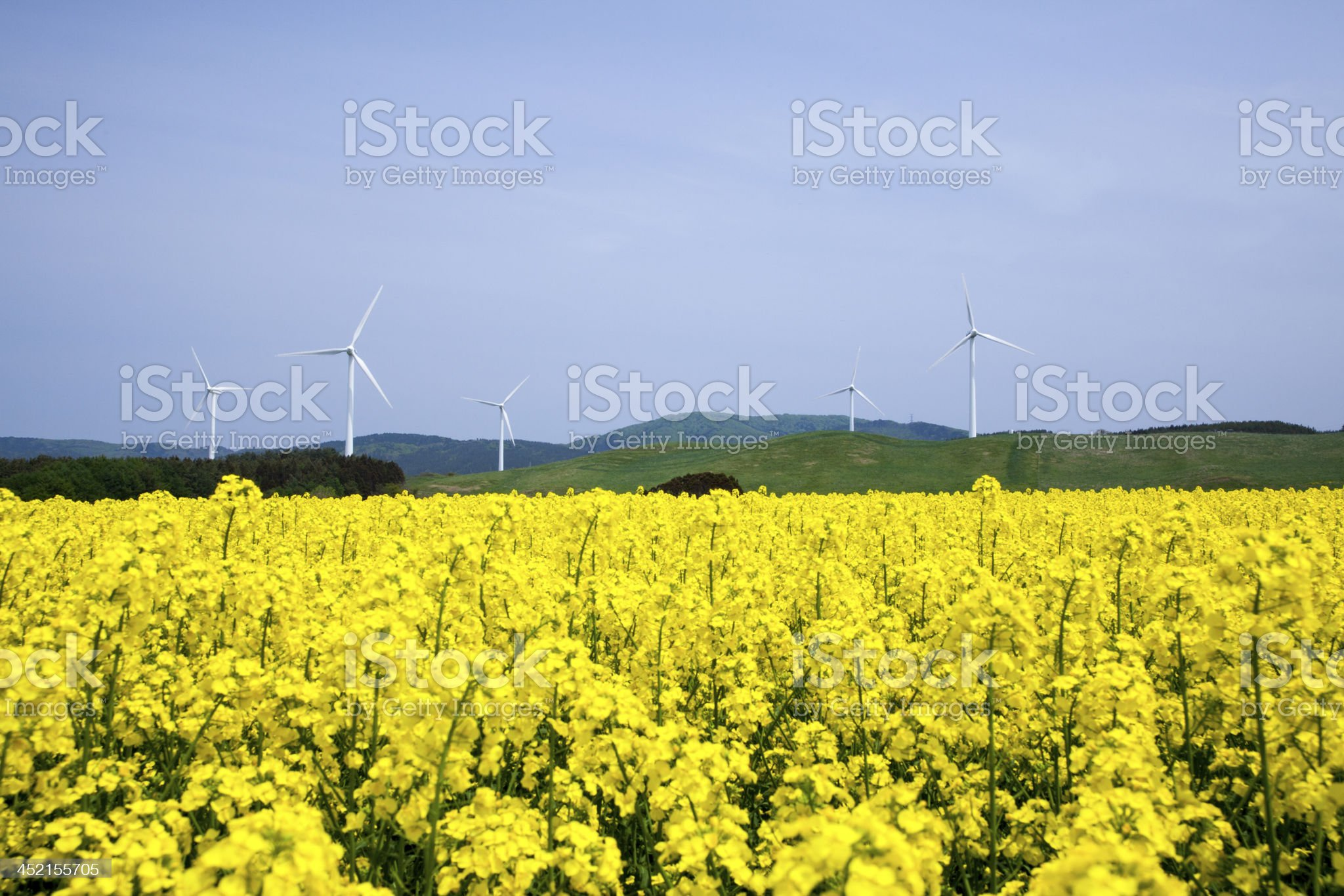 Yellow landscape with turbines royalty-free stock photo