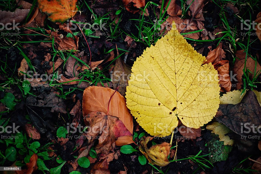 Yellow leaf fallen on grass stock photo