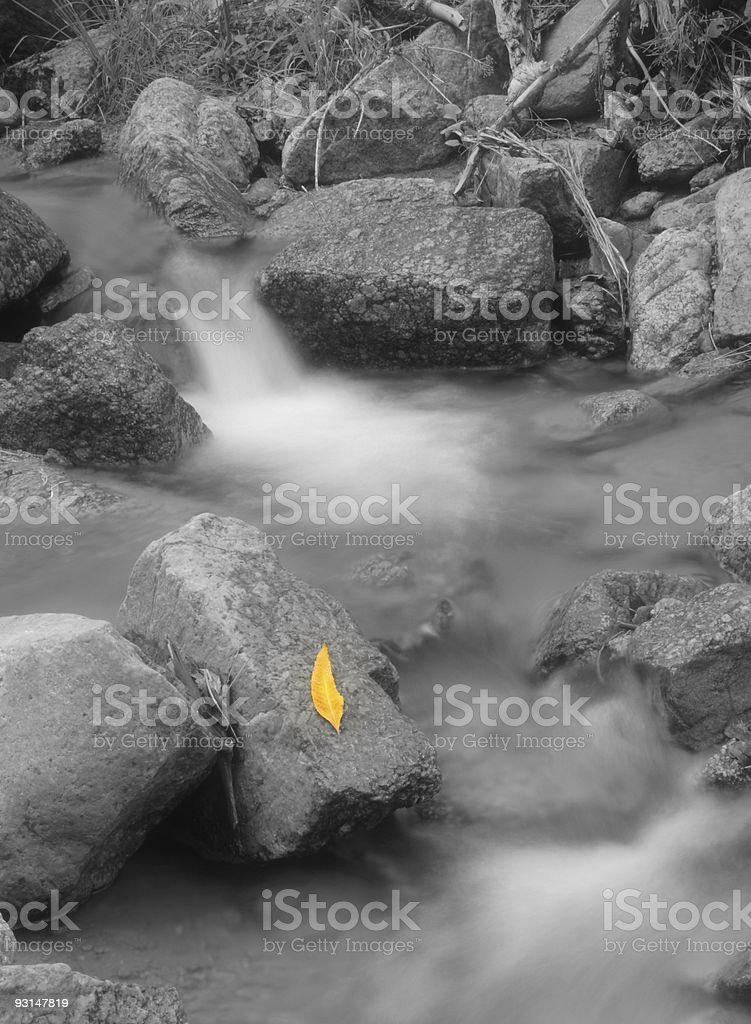Yellow leaf in stream royalty-free stock photo