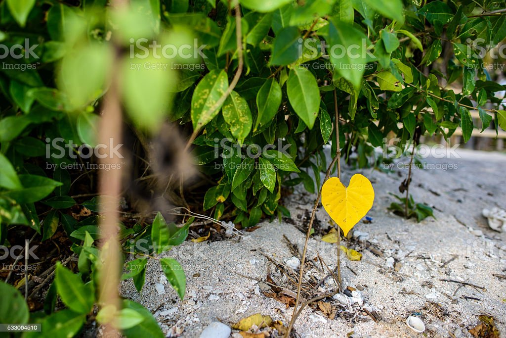 yellow leaf looking like a heart stock photo