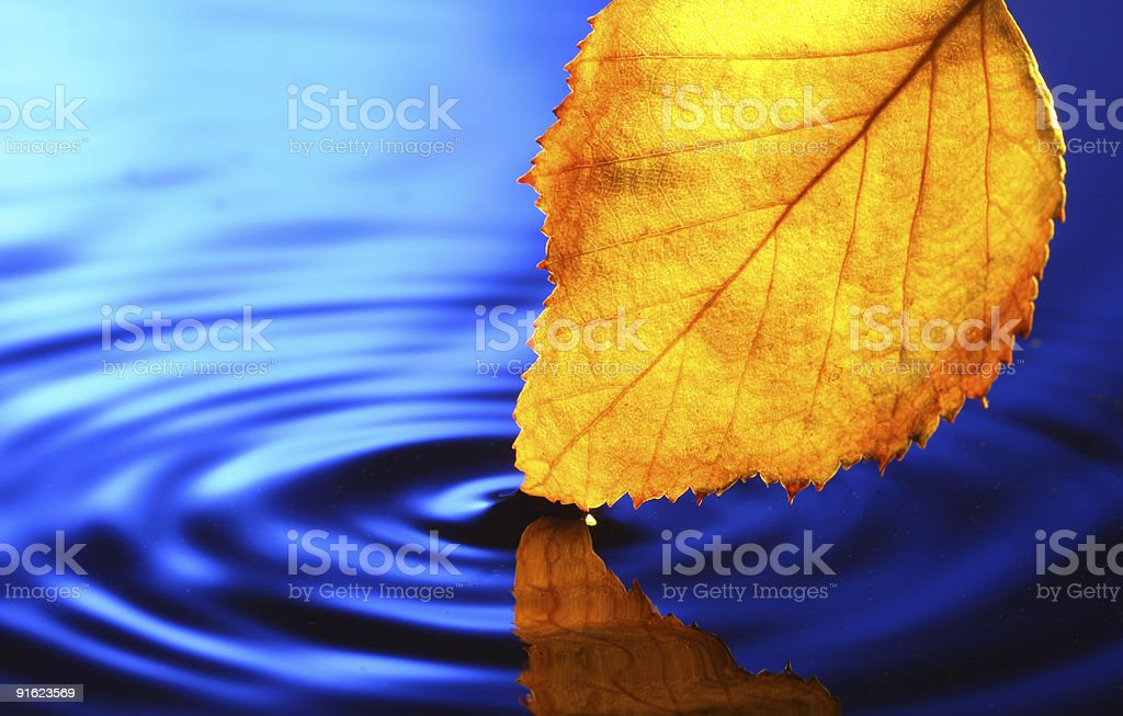 yellow leaf near water royalty-free stock photo