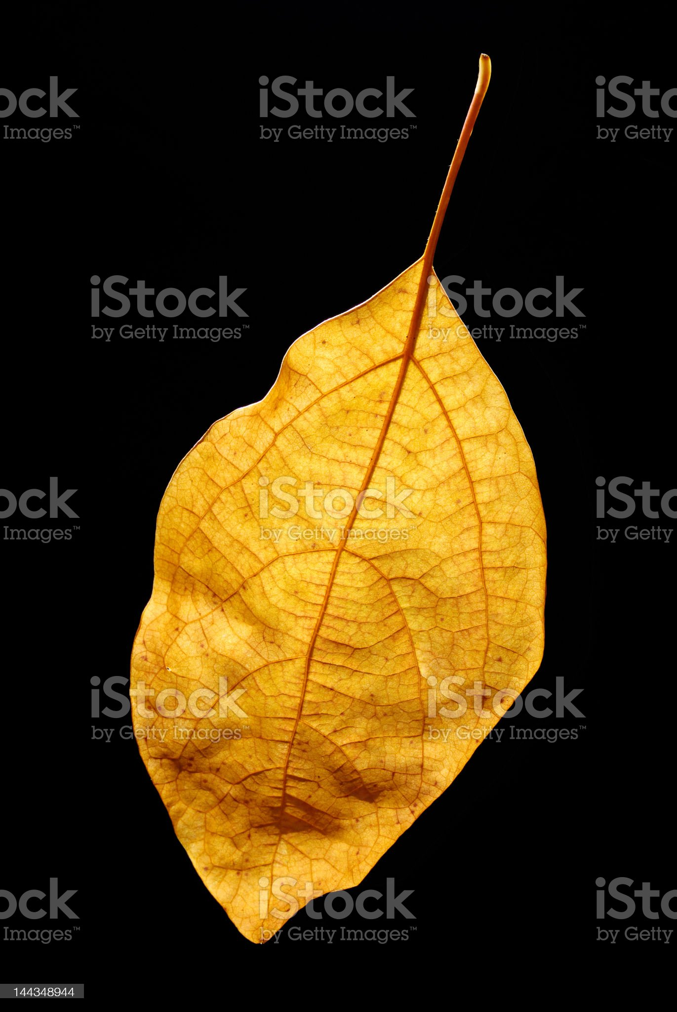 Yellow leaf on black background royalty-free stock photo
