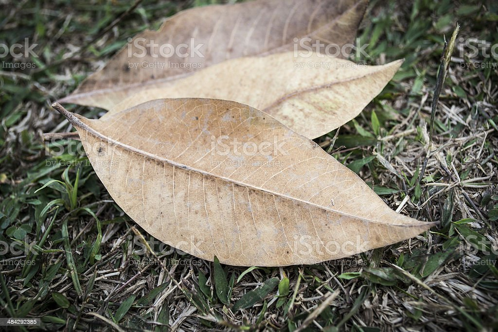 Yellow leaf on field stock photo
