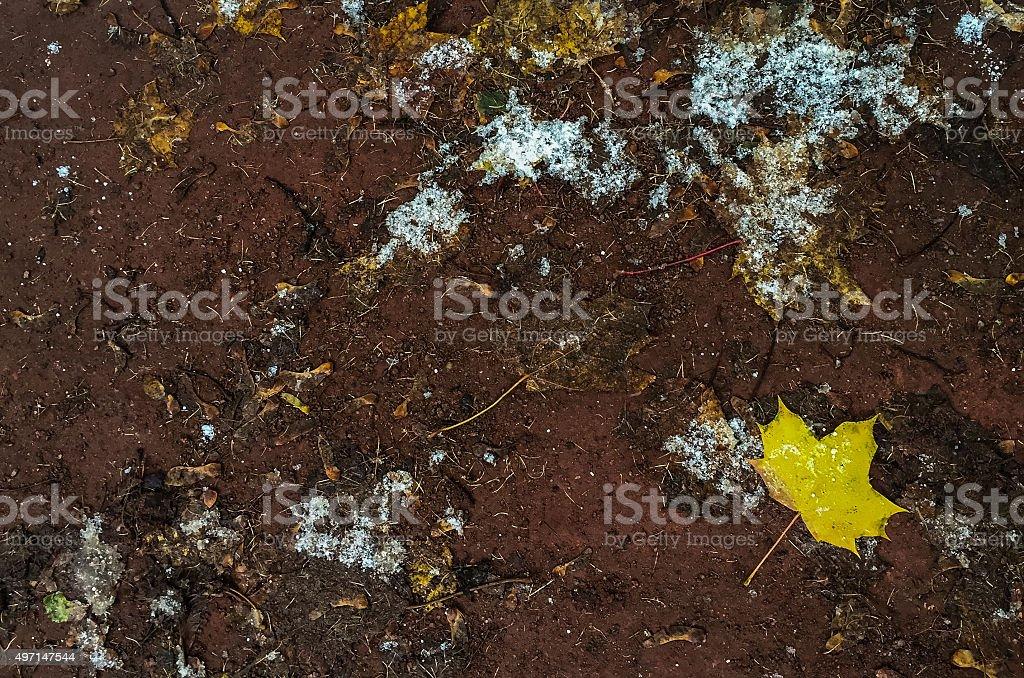 Feuilles jaunes sur le sol photo libre de droits