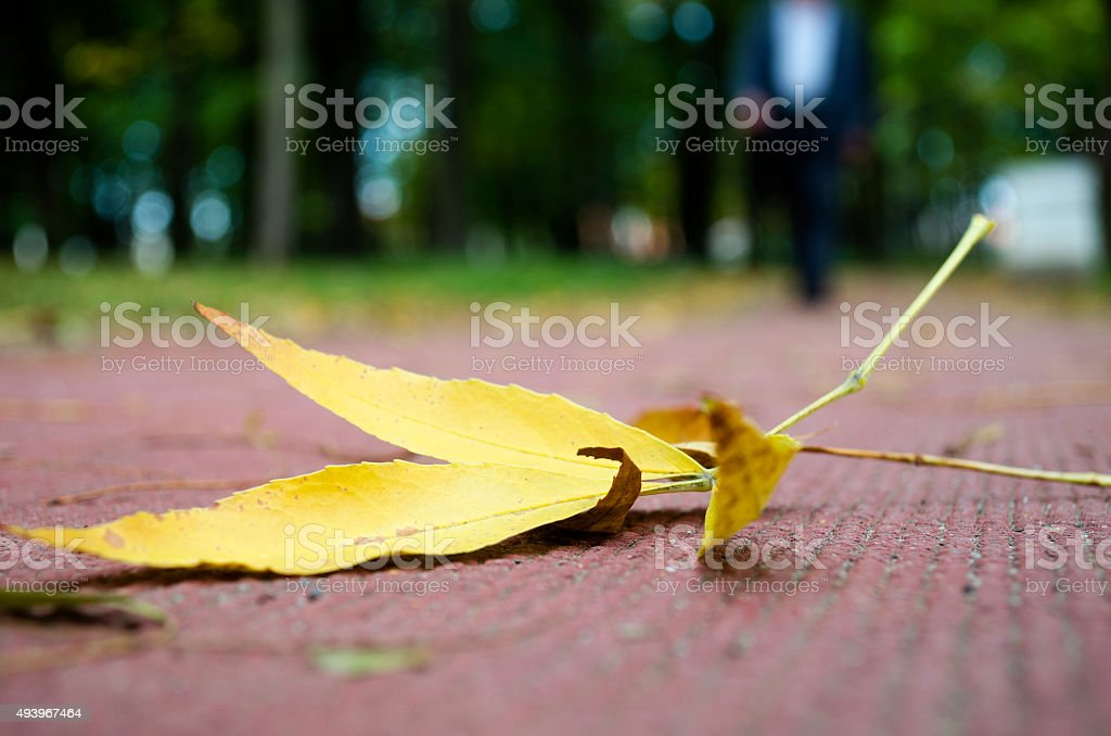 Yellow  leaf royalty-free stock photo