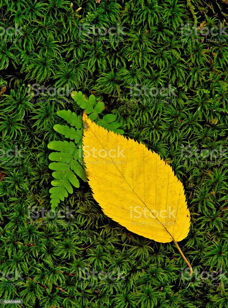 Yellow Leaf royalty-free stock photo