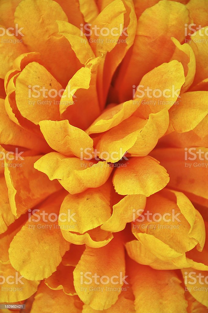 yellow leafes royalty-free stock photo