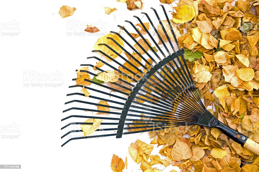 Yellow Leaves and Rake... Close-up royalty-free stock photo