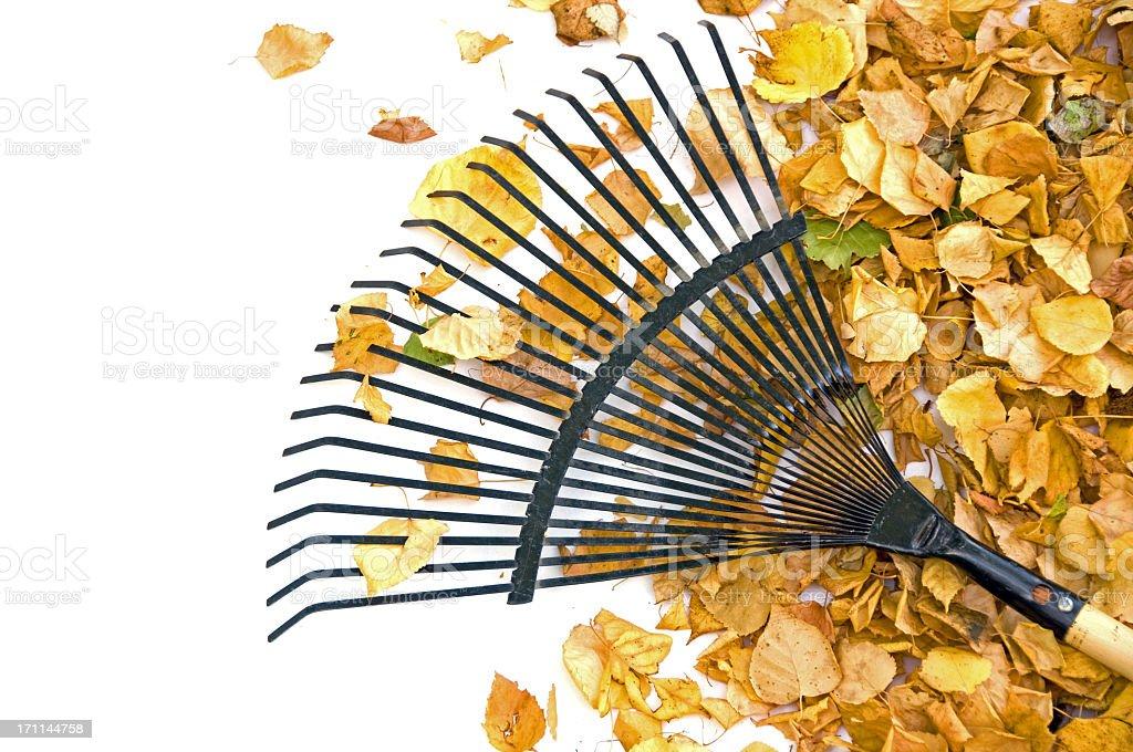 Yellow Leaves and Rake... Close-up stock photo