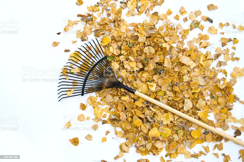 Yellow Leaves and Rake...Distant royalty-free stock photo