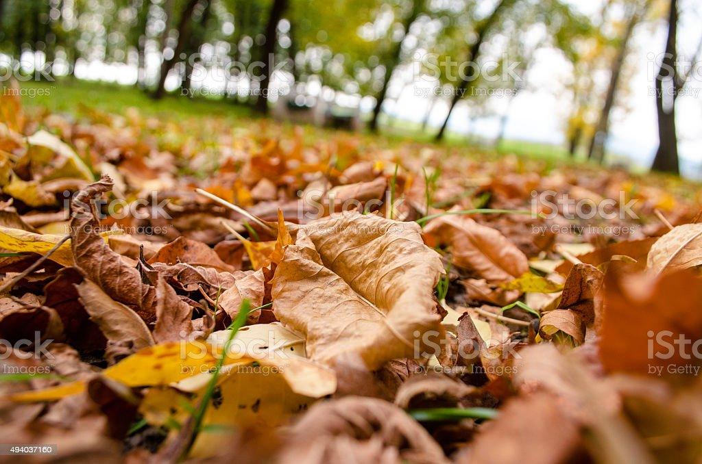 Yellow  leaves autumn stock photo