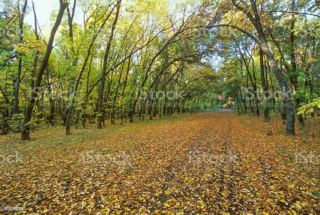 Yellow leaves in autumn forest. Astrakhan region, Russia stock photo