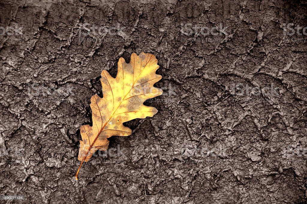 yellow leaves in autumn stock photo