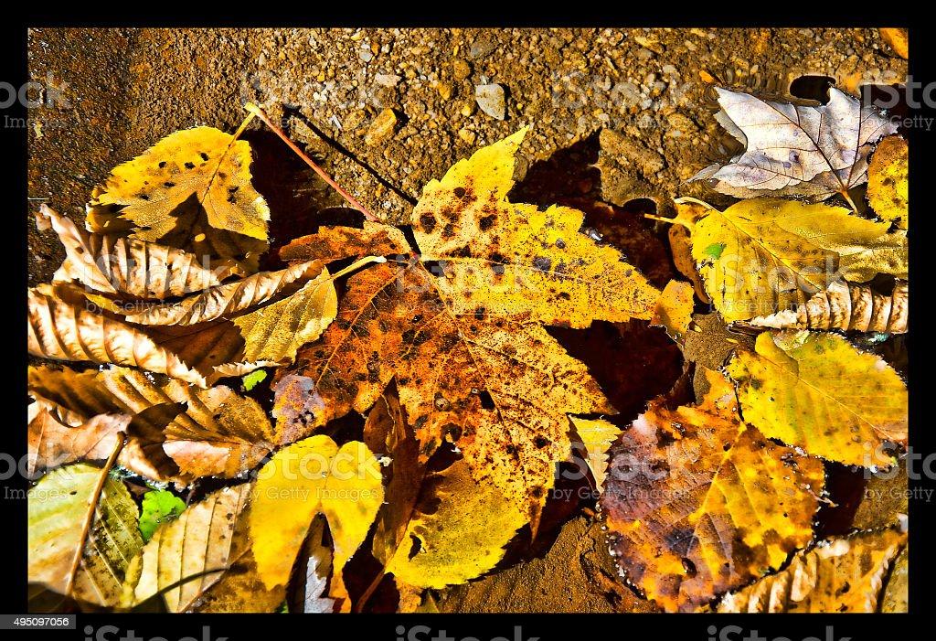 Giallo foglie in acqua foto stock royalty-free