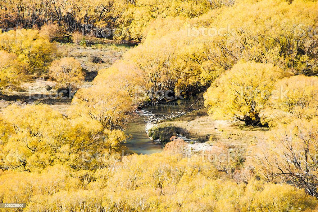 Yellow Leaves of Lindis Valley in Autumn, New Zealand stock photo