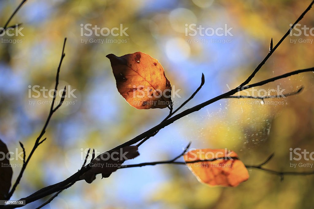 Yellow leaves on a branche royalty-free stock photo