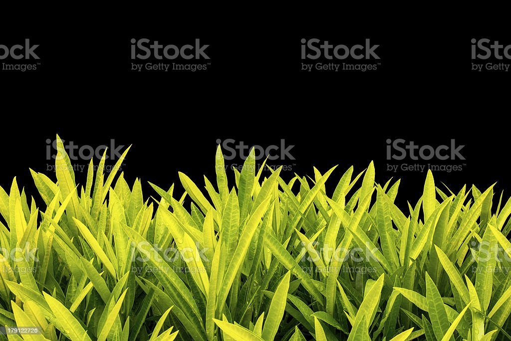yellow leaves on black background royalty-free stock photo