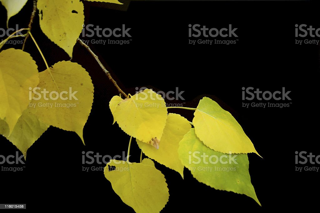 Yellow Leaves on Black stock photo