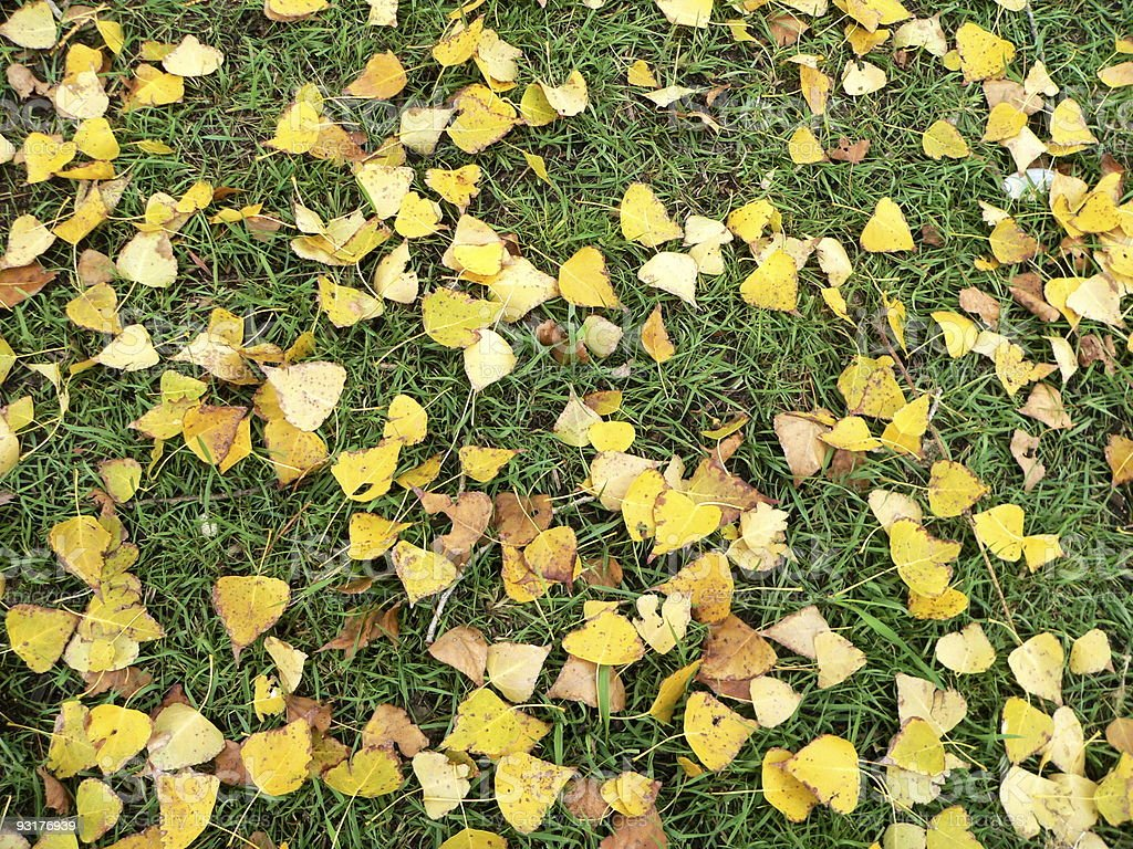 yellow leaves on grass stock photo