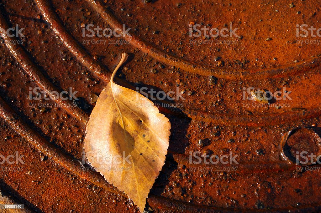 yellow leaves on rusty metal royalty-free stock photo
