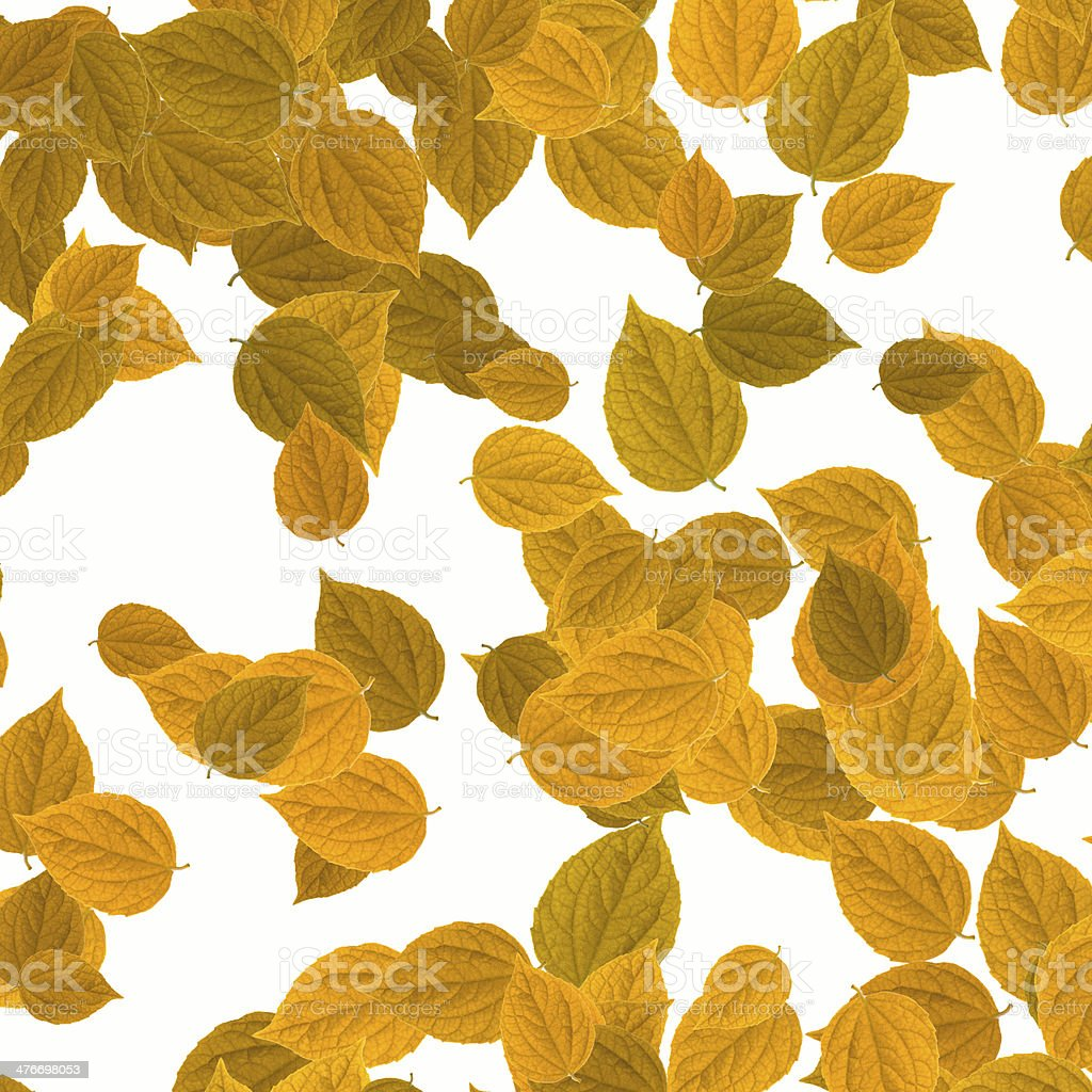 yellow leaves over white background royalty-free stock photo
