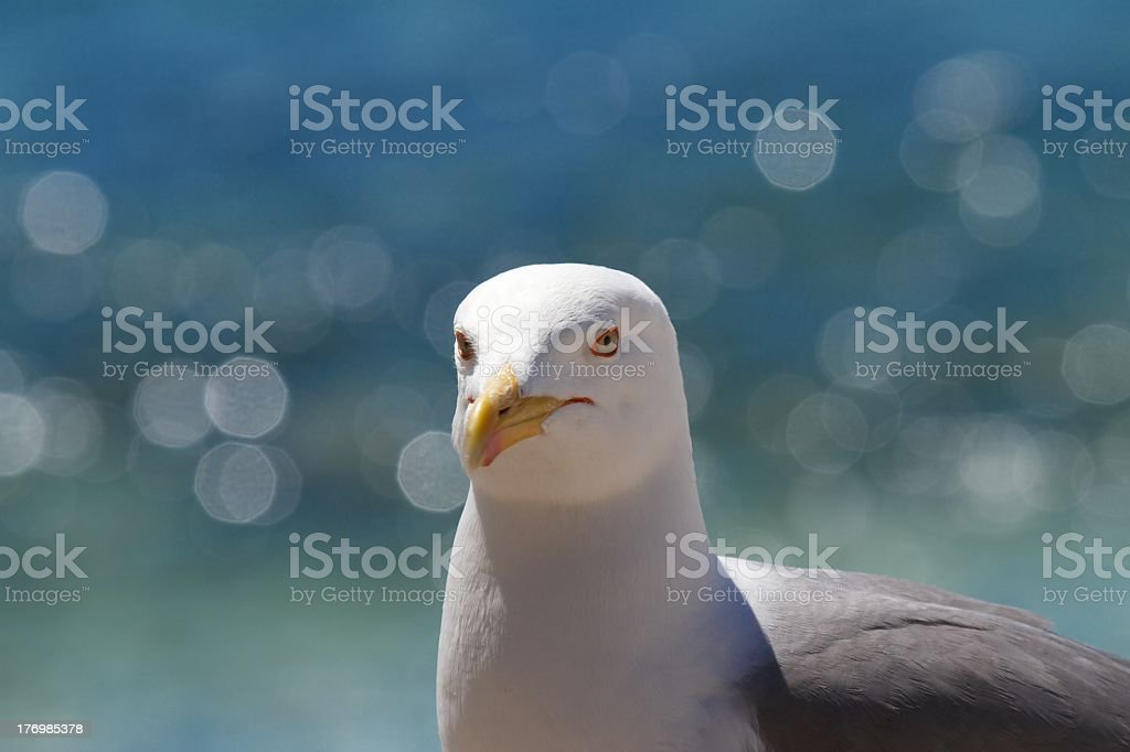 Yellow Legged Gull with sea sparkling behind stock photo