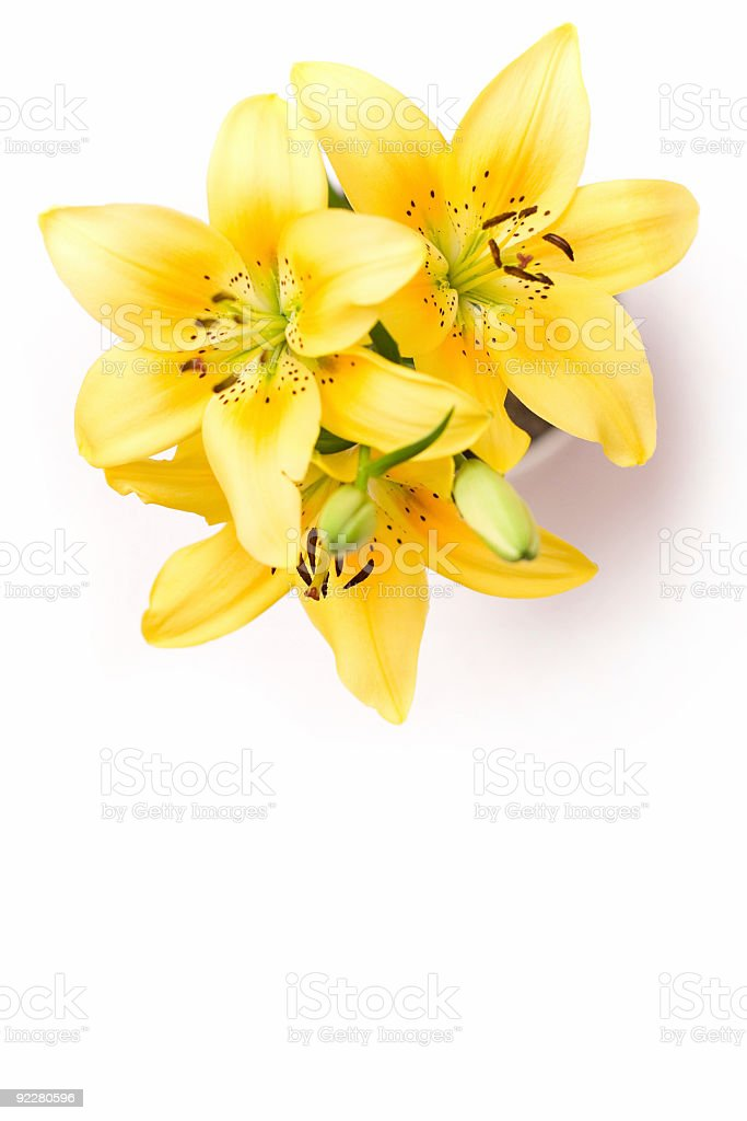 Yellow lilies with copy space royalty-free stock photo