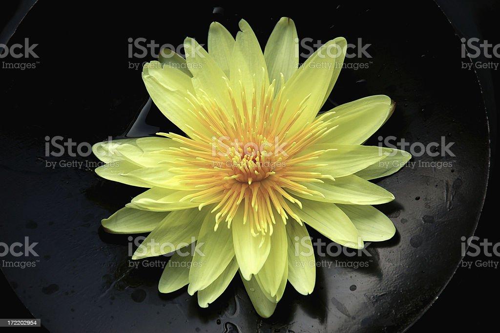 Yellow lotus royalty-free stock photo