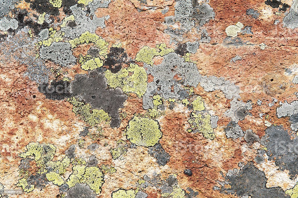 Yellow map lichen on red rocks stock photo