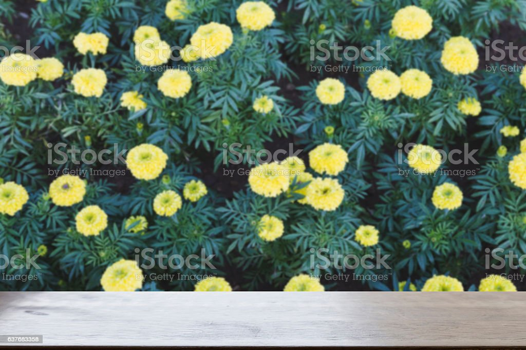 yellow Marigold flower in garden (blur image) with stock photo