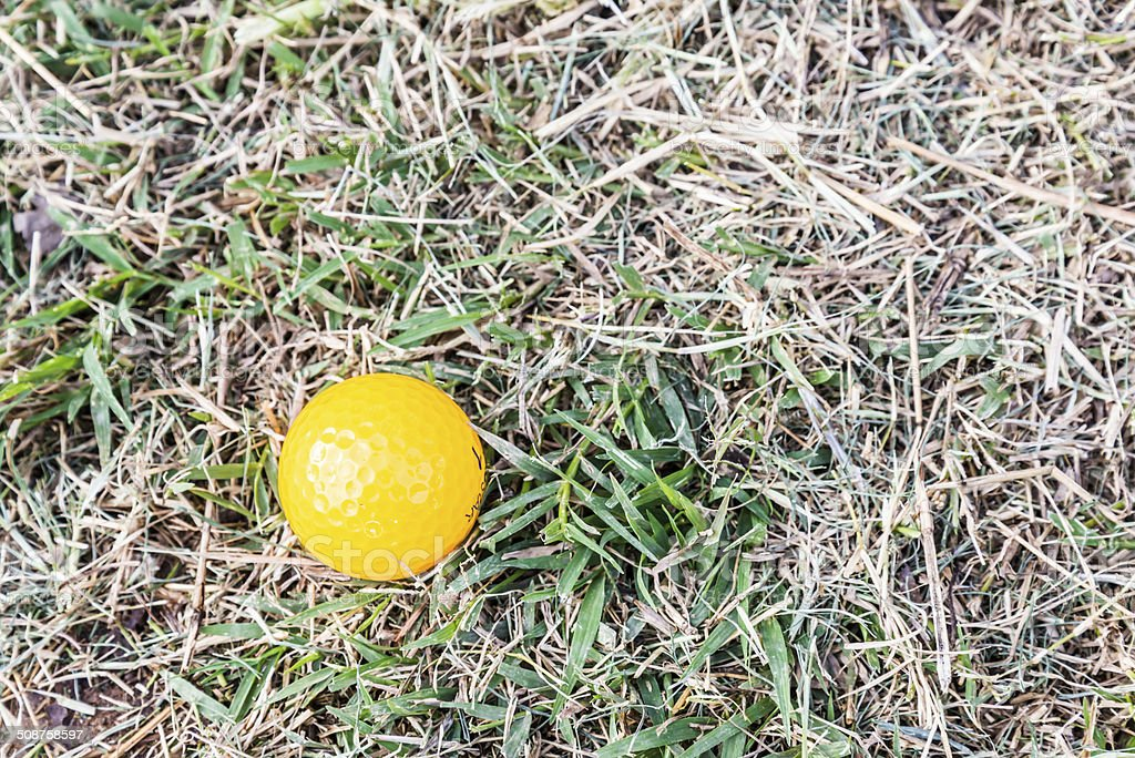Yellow Miniature Golf Ball in the rough stock photo