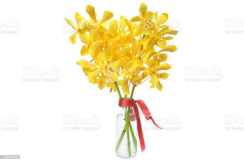 Yellow mokara orchid stock photo