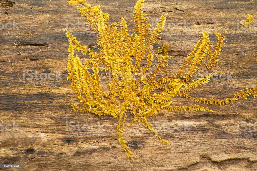 Yellow moss covers a fallen log in the Smokies. stock photo