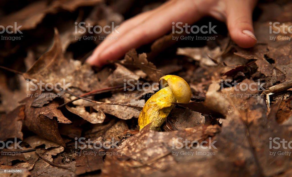 Yellow mushroom stock photo