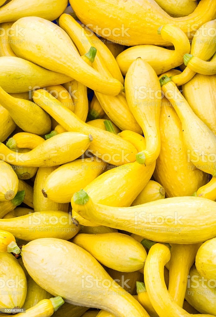 Yellow or crook neck squash on display stock photo