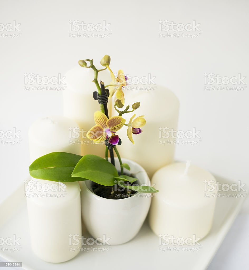yellow orchid and a candle royalty-free stock photo