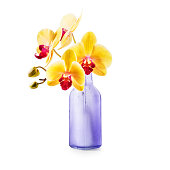 Yellow orchid in vase