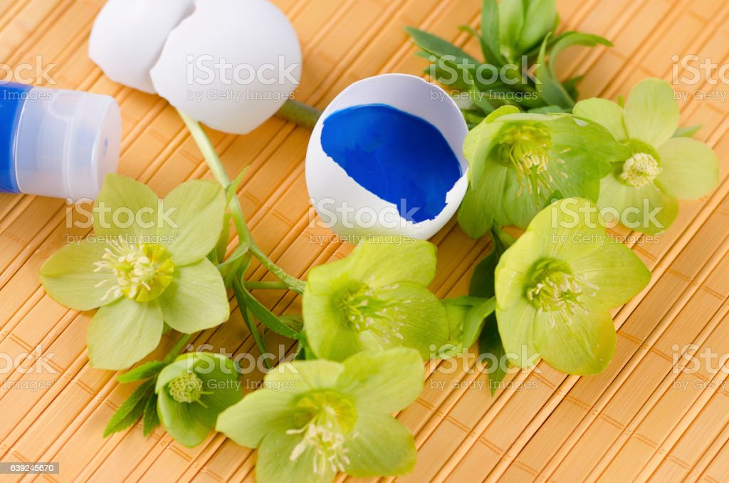 Yellow pad and Easter decoration with egg shells and hellebore stock photo