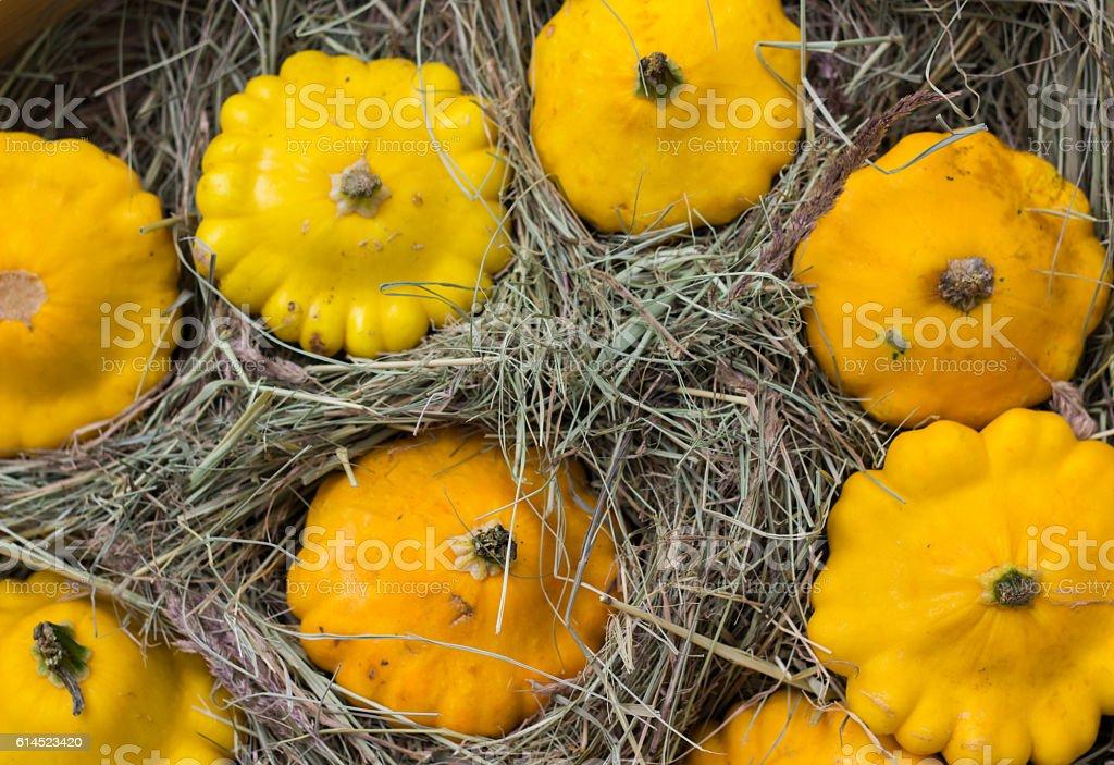 yellow Patty Pan squash displayed at farmer's market. Pumpkin stock photo