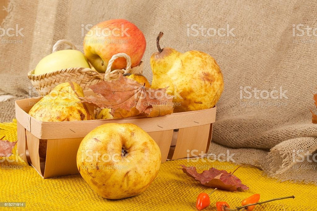 Yellow pears and pink apples stock photo
