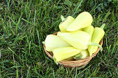 Yellow pepper in a wooden basket on a grass