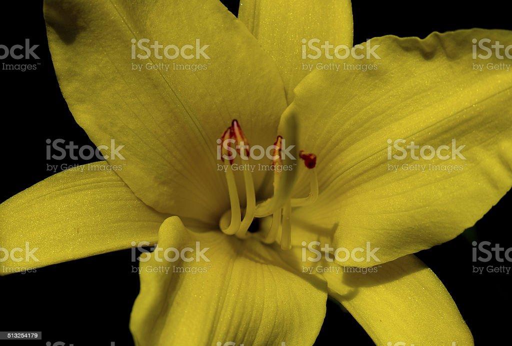 Yellow Petal royalty-free stock photo