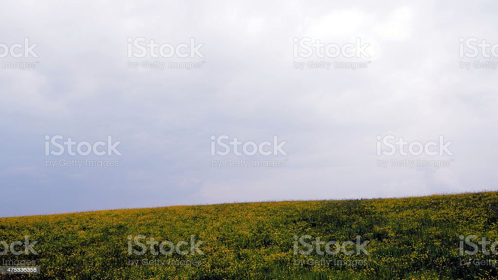 Yellow stock photo