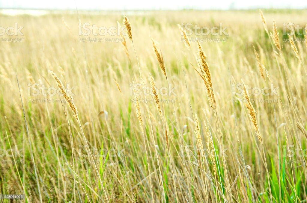 yellow plants background stock photo