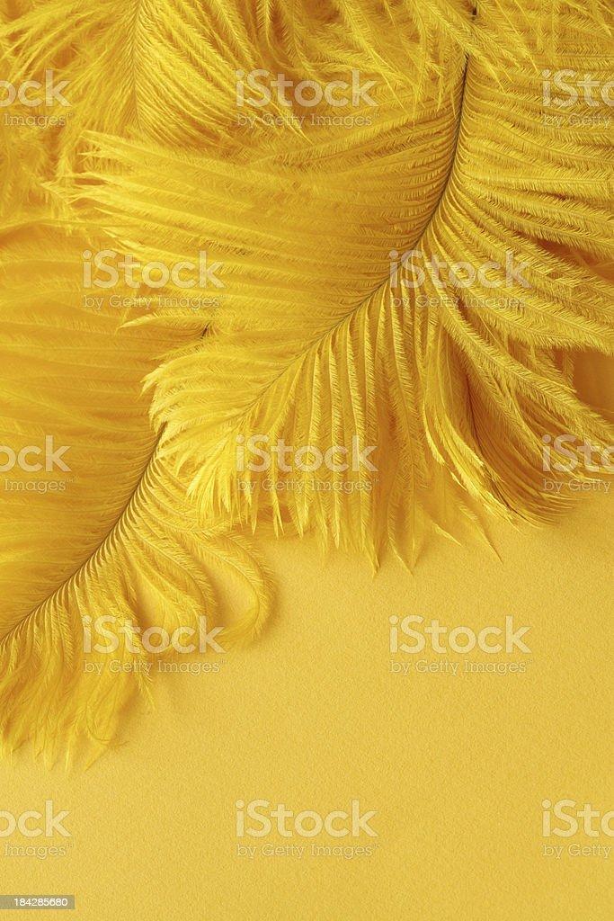 Yellow Plumes royalty-free stock photo